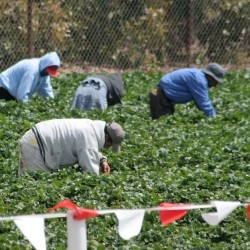 Agricultural_Workers