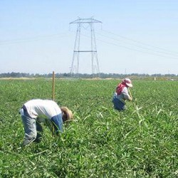 OHIP_farmworkers_heat_250x250